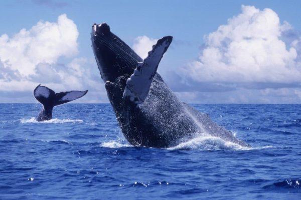 ballenas-e1517344636305